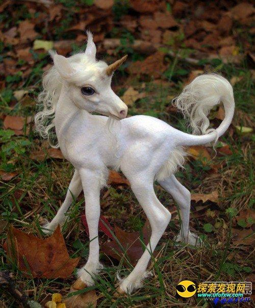 古代神话传说中一种头顶正中长有一支单角的动物