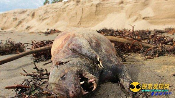美国海滩惊现不明生物:疑