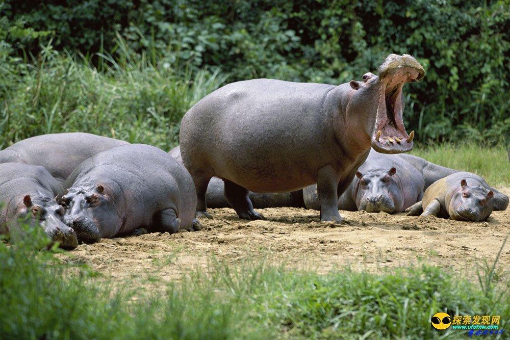大多数致命的非洲怪兽都是食草动物