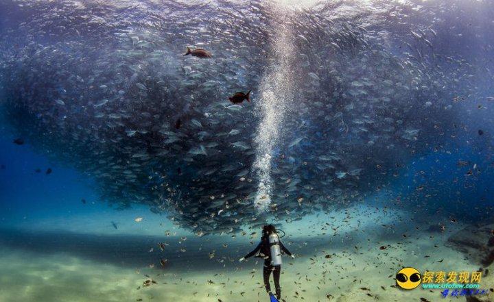 美夫妇潜水偶遇鱼群龙卷风