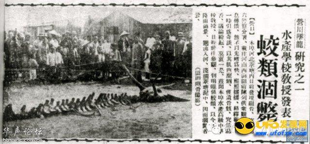 真龙现身事件:真龙被首次发现图片