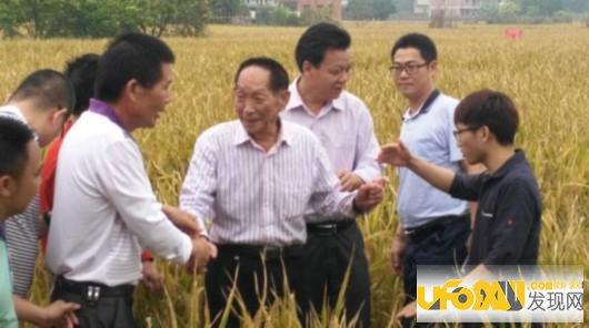 袁隆平水稻破纪录:亩产量超1000公斤