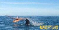 章鱼海豹上演恶战 场面壮观把游人都给看呆了