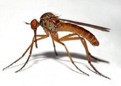 科学家借蚊子研究宇宙辐射对人类影响