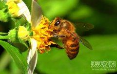 欧盟国家蜜蜂大量死亡或预示生态失衡
