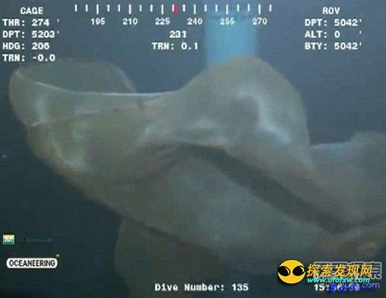 墨膜状深海怪物身份确认:胎盘水母