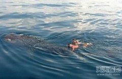 美国最牛船长:骑坐20吨巨型鲸鲨出海