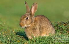 柔弱小兔子导致了一个人类种族的灭亡