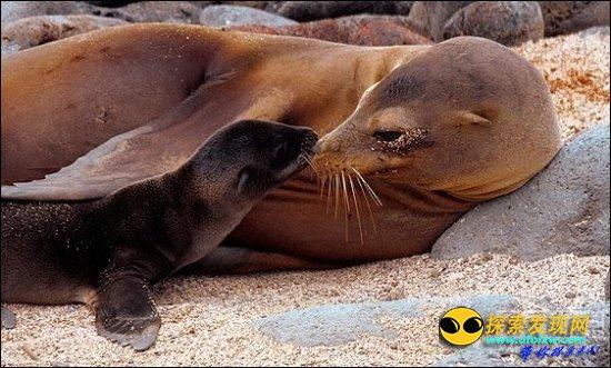 加拉巴哥群岛是稀有鸟类、爬行动物和海洋生物的发源地   游客们可以与企鹅、海狮一起游泳,或者徒步去仍旧活跃的火山旅行。   4、珊瑚岛   紧贴着西澳大利亚的珊瑚岛是海底生物的天堂,也是最大的和可进入的裙礁。因为在近海处,游泳便可到达。有大量的游轮来往此地观看鲸鱼。