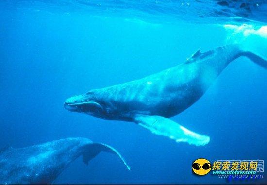 不可思议:世界上十大最奇特的动物