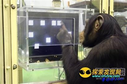 世上最聪明的十种动物:猪竟也上榜?