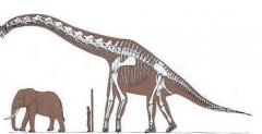 探秘蜥脚类恐龙为何有巨大的体型