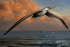 史前最大鸟类化石:巨翼展开超6米