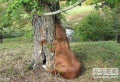 吃人无数!传说中的恐怖食人树真存在?