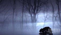 孤魂野鬼游荡的夜晚 惊魂恐怖槐