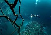 海底里藏着河流和森林